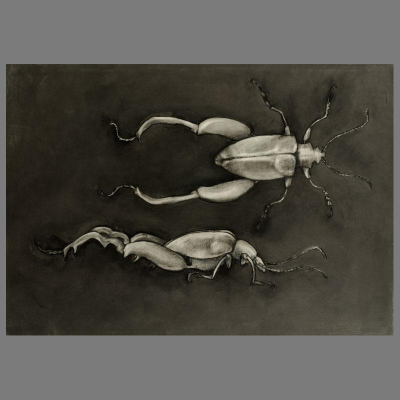 Lianenkever-70x100cm-grafiet_op_papier