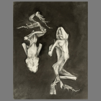 Kikkers-III-70x100cm-grafiet_op_papier