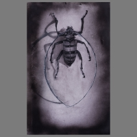 Torren+Kevers_2011-2013-Grafiet_Acrylaten(spuitflacons)-03